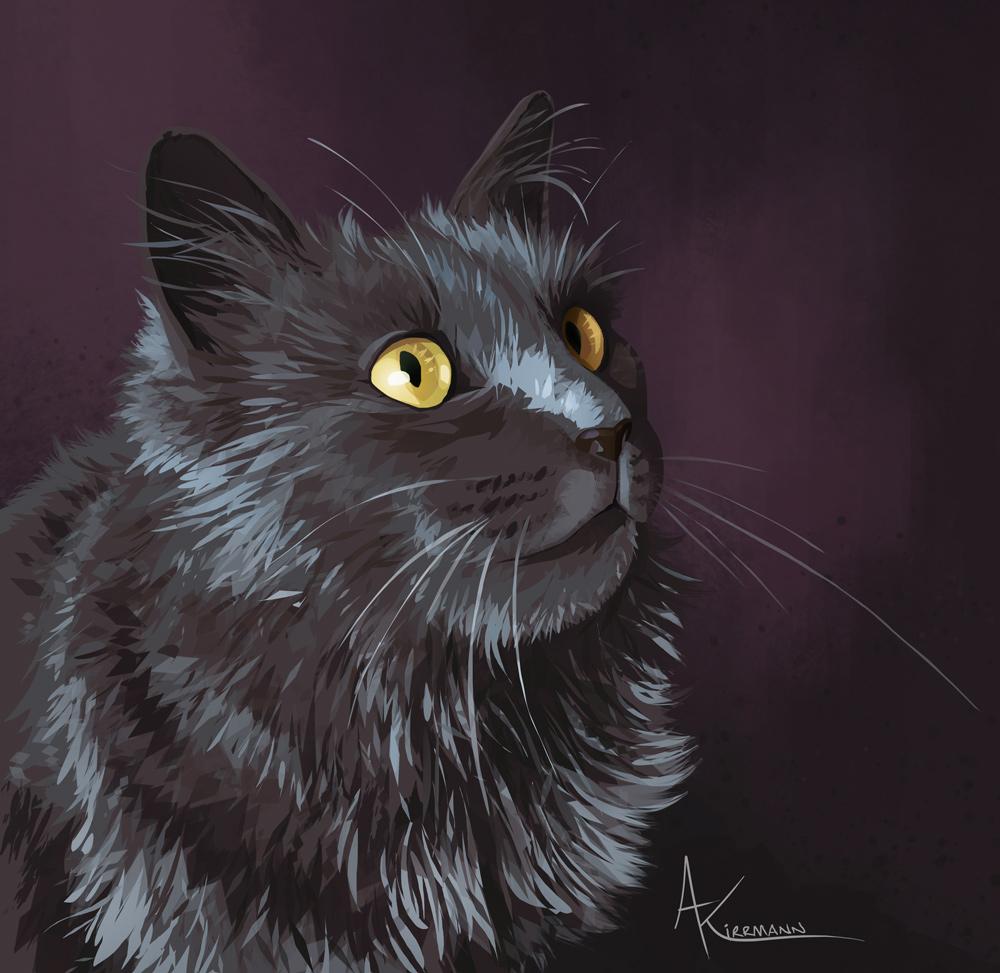 Fille - nebelung cat