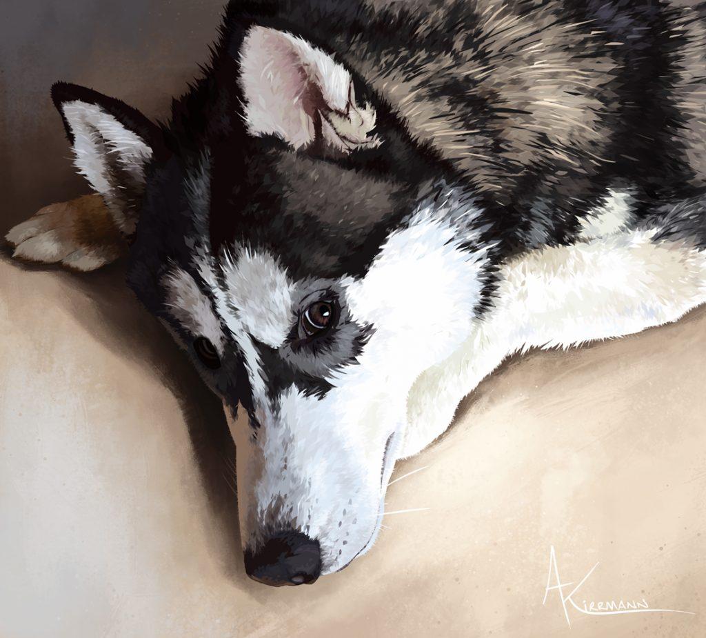 Nasko - husky