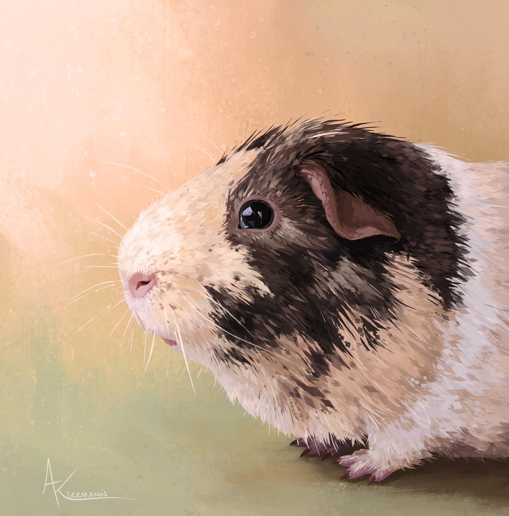 Bidule • guinea pig • digital