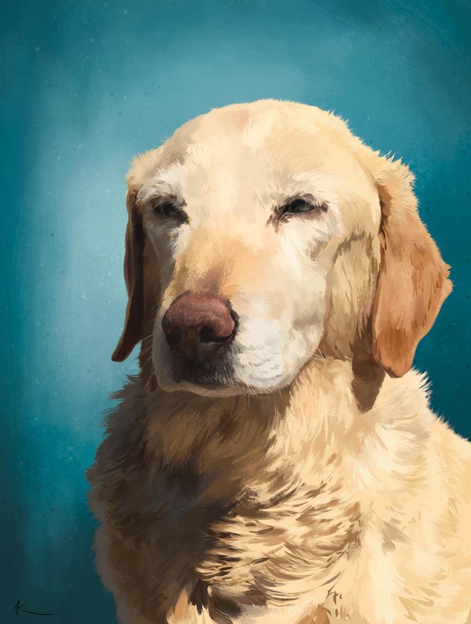 Koutya • labrador golden retriever • digital